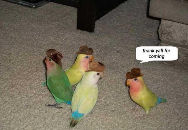 thankyallforcoming.jpg